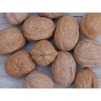 Dárečky-žertíky-hry-ptákoviny - Kondom v ořechu