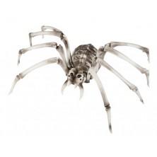 Kostra Pavouk